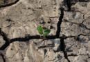 La relación entre la sequía, el calor extremo y el cambio climático